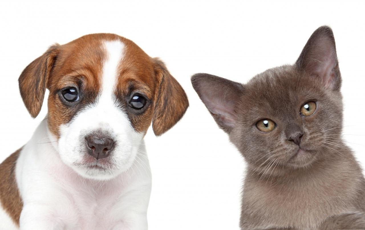 via_veterinaria_imatge