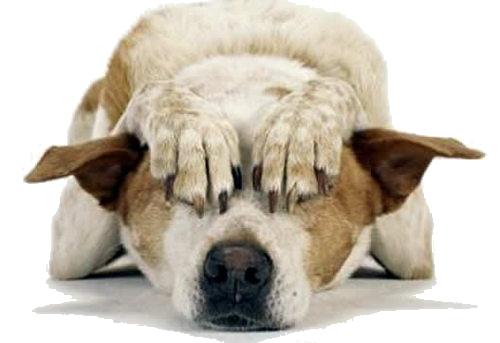 Resultado de imagen de perro conmiedo