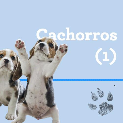 Consejos para cachorros