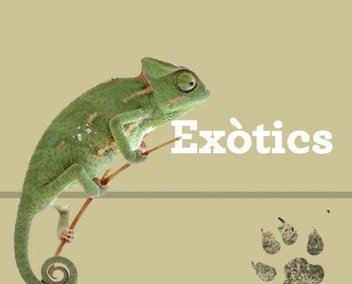 Legislació exòtics