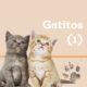 Consejos para gatitos
