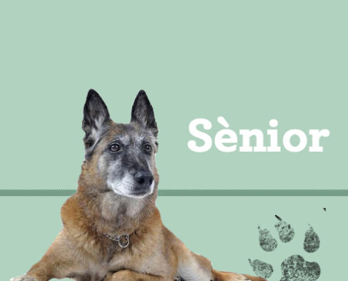 Consells per a gossos sènior