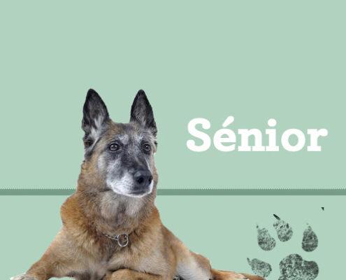 Consejos para perros senior