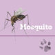 Picada Mosquito Leishmaniosis