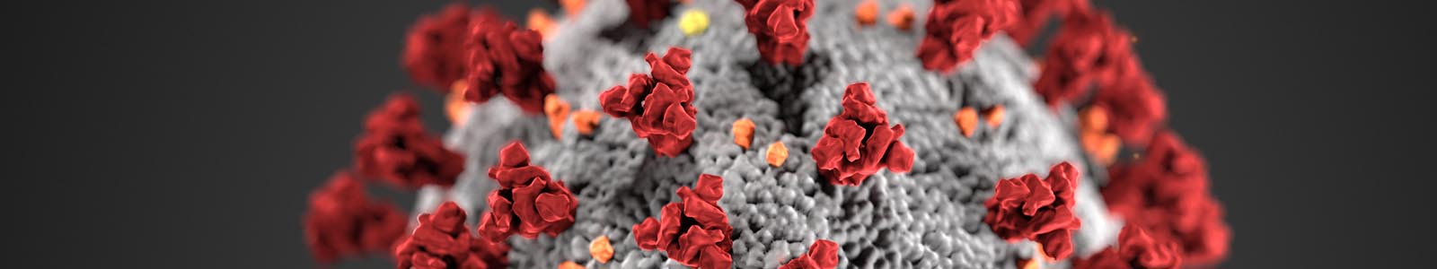 Coronavirus i Mascotes